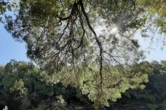 Les arbres poussent la tête en bas